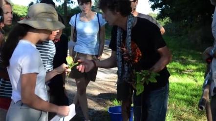 observation des plantes